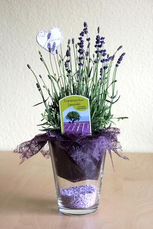 Gastgeschenk aus Lavendel